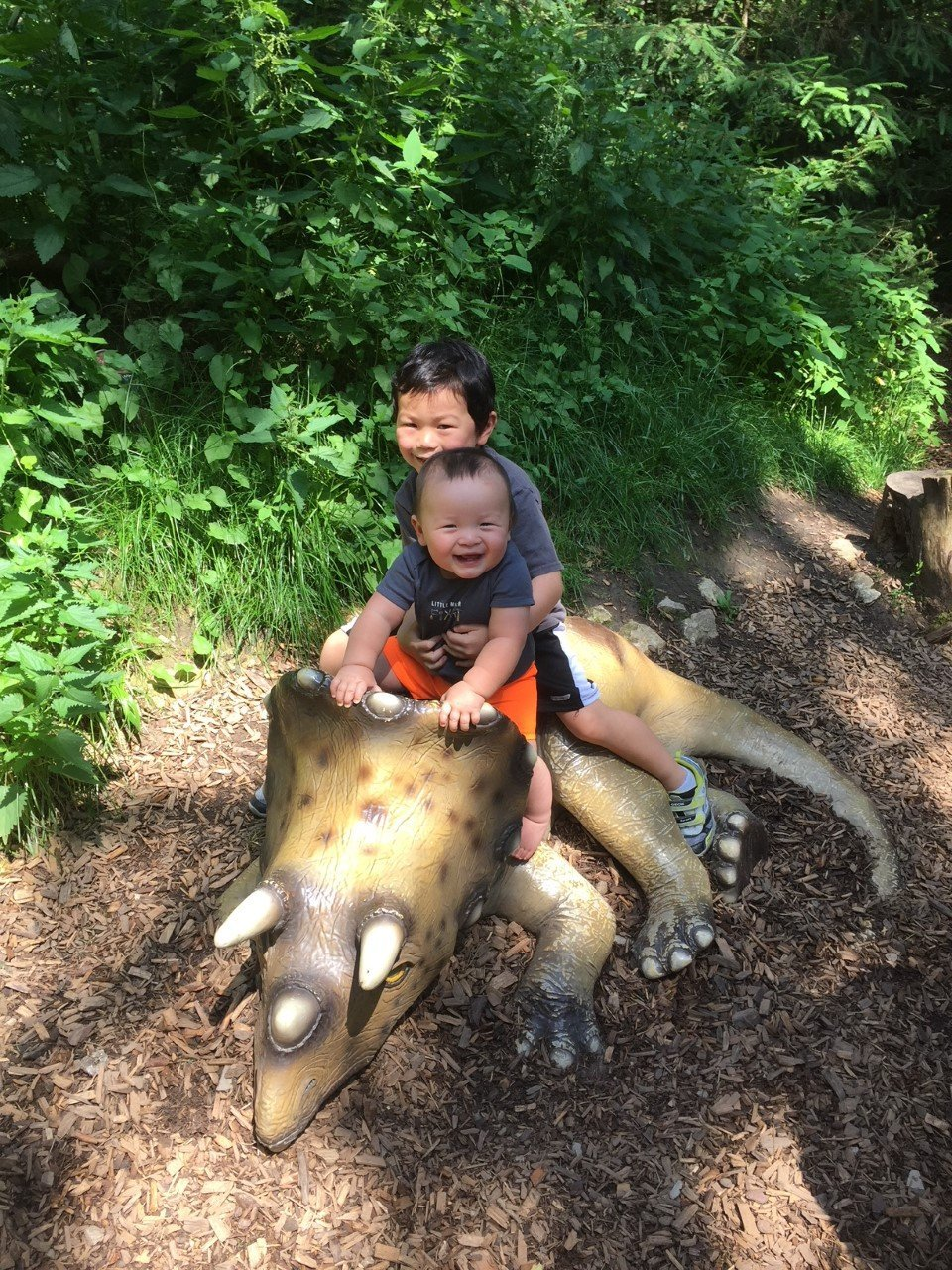 Riding a baby Triceratops