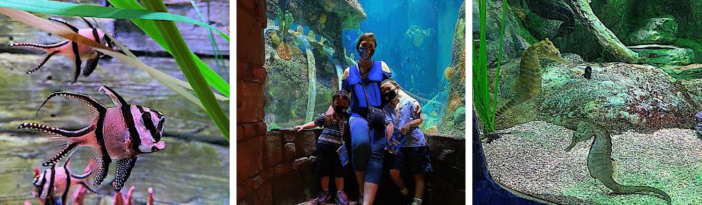 Sea Life Aquarium - First Indoor Kansas City Activity To Explore